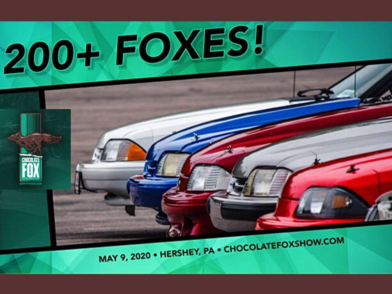 Chocolate Fox Mustang Show Image